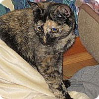 Adopt A Pet :: Jasmine/Jillian - Richfield, OH