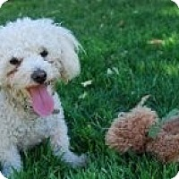 Adopt A Pet :: Lucy - Only $95 adoption! - Litchfield Park, AZ