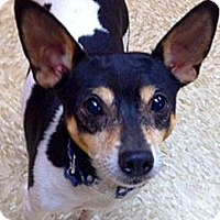 Adopt A Pet :: Harold - Green Bay, WI