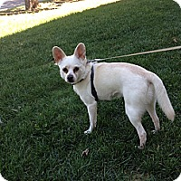 Adopt A Pet :: Ghost - Edmonton, AB