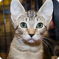 Adopt A Pet :: Jake - Irvine, CA