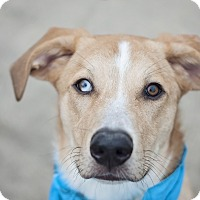 Adopt A Pet :: Chuy - Kingwood, TX