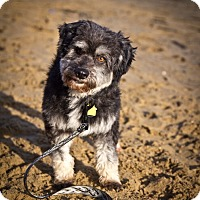Adopt A Pet :: Kingston - Orange, CA