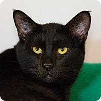 Adopt A Pet :: Shirlee - Calgary, AB