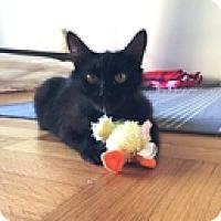 Adopt A Pet :: Lilie - Vancouver, BC
