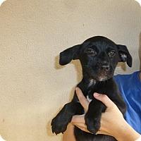 Adopt A Pet :: Polly - Oviedo, FL