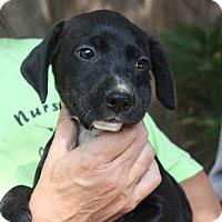 Adopt A Pet :: Riley - kennebunkport, ME