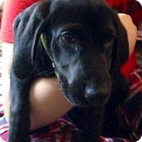 Adopt A Pet :: Alana - Marlton, NJ