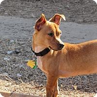 Adopt A Pet :: Tuck - Broken Arrow, OK