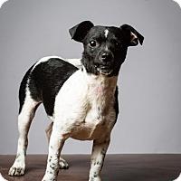 Adopt A Pet :: Lil Abner - Meet Him! - Woonsocket, RI