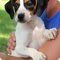 Adopt A Pet :: Devin - Glastonbury, CT