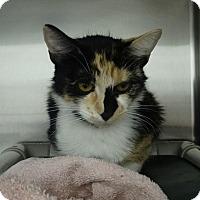 Adopt A Pet :: Eden - Elyria, OH