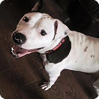 Adopt A Pet :: Yale - Durham, NC