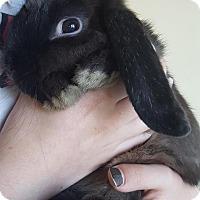 Adopt A Pet :: Jasmine - Los Angeles, CA