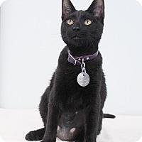 Adopt A Pet :: Reese - Bradenton, FL