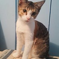 Adopt A Pet :: Sabrina - Livonia, MI