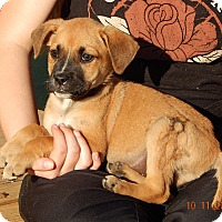 Adopt A Pet :: Whiskey (6 lb) Video! - Niagara Falls, NY