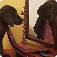 Adopt A Pet :: Mitch (James/Maryland-Delaware) - Newark, DE