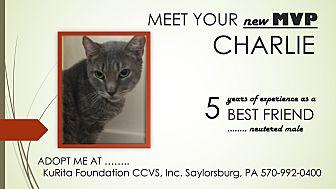 Domestic Shorthair Cat for adoption in Saylorsburg, Pennsylvania - Charlie