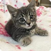 Adopt A Pet :: Carla - Menifee, CA