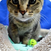 Adopt A Pet :: Devon - Monroe, MI