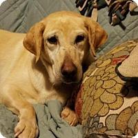 Adopt A Pet :: Trixie - Island Lake, IL