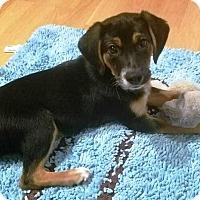 Adopt A Pet :: Chuckie - Concord, CA