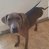 Adopt A Pet :: Panchenella - St John, VI