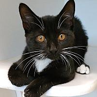Adopt A Pet :: Margo - League City, TX
