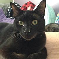 Adopt A Pet :: Jax - Yardley, PA