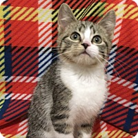 Adopt A Pet :: George Jones - Green Bay, WI