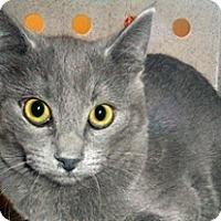 Adopt A Pet :: 329156 - Wildomar, CA