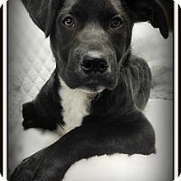 Adopt A Pet :: Sophie - Pascagoula, MS
