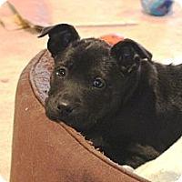Adopt A Pet :: Snap - Marietta, GA