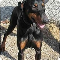 Adopt A Pet :: Zuri--adopted!! - New Richmond, OH