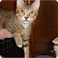 Adopt A Pet :: Luka - Orlando, FL