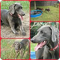 Adopt A Pet :: LAYLA - Davenport, FL