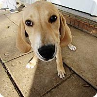 Adopt A Pet :: JJ - Silsbee, TX