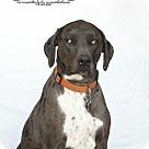 Adopt A Pet :: Jasper R Hall