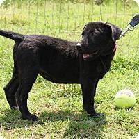 Adopt A Pet :: Josie - Natchitoches, LA