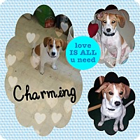 Adopt A Pet :: Charming - DOVER, OH