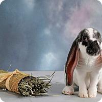 Adopt A Pet :: Chance - Marietta, GA