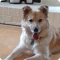 Adopt A Pet :: Sandy - Alpharetta, GA