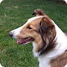 Adopt A Pet :: Quinn