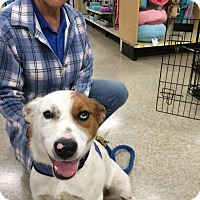 Adopt A Pet :: Eclipse - Hohenwald, TN