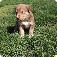 Adopt A Pet :: Jordan - mooresville, IN