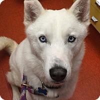 Adopt A Pet :: *URGENT* Royce - Van Nuys, CA