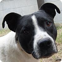 Adopt A Pet :: Hermann Rorschach - Marion, AL