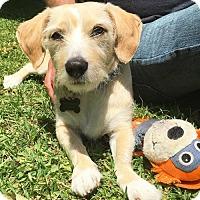 Adopt A Pet :: Getzy - Los Angeles, CA