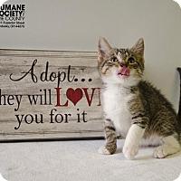 Adopt A Pet :: MEEKO - Sandusky, OH